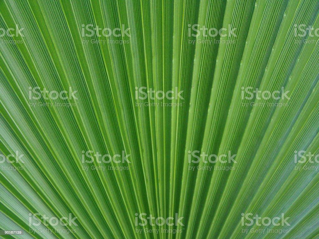 Palm leaf detail 1 royalty-free stock photo