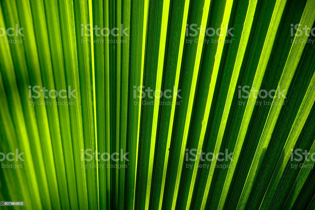Palm leaf detail stock photo
