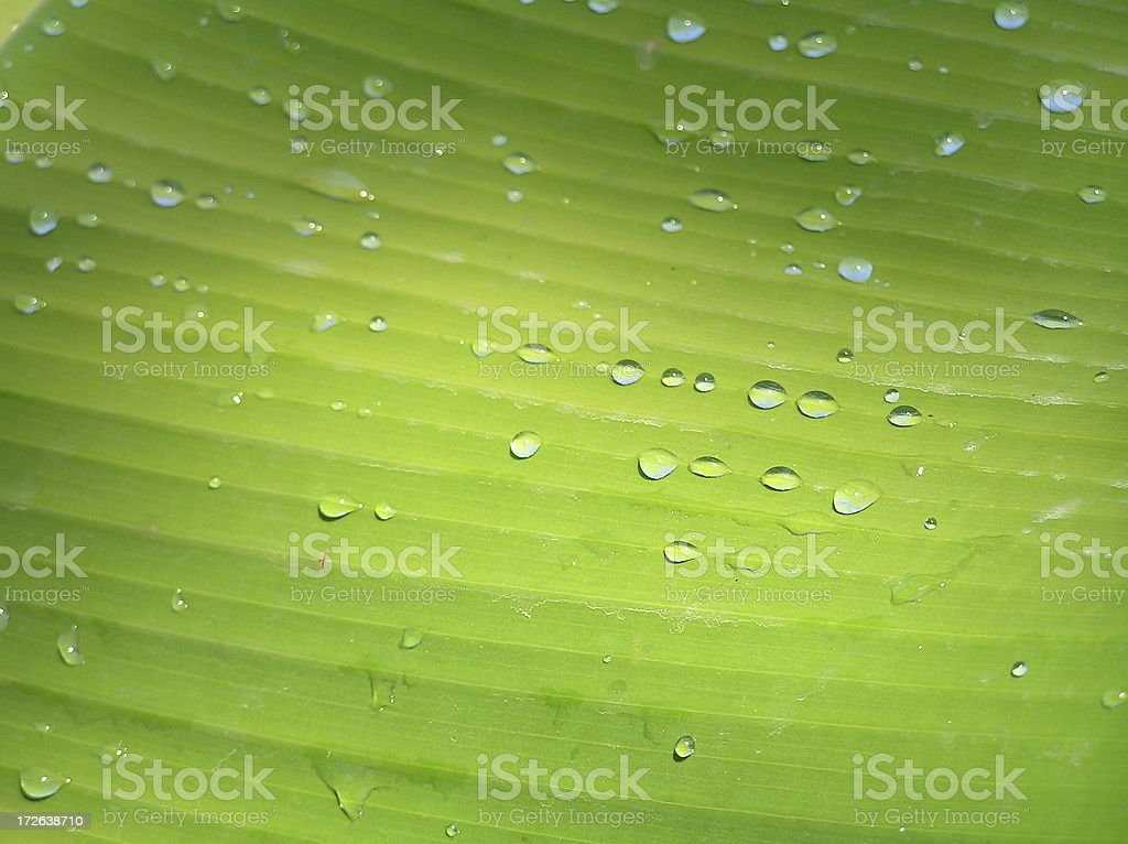 Palm leaf dew royalty-free stock photo