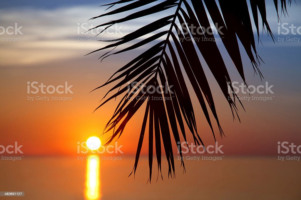 Palm leaf during sunset royalty-free stock photo