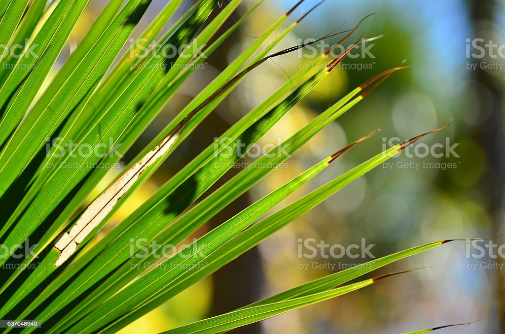 Palm leaf fingers with pointy shadows and bokeh stock photo