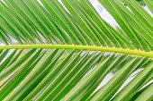 Palm leaf green background