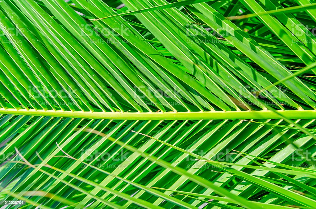 Palm leaf green background stock photo