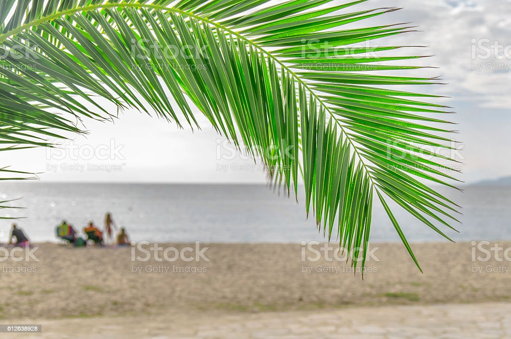 Palm leaf green with beach background stock photo