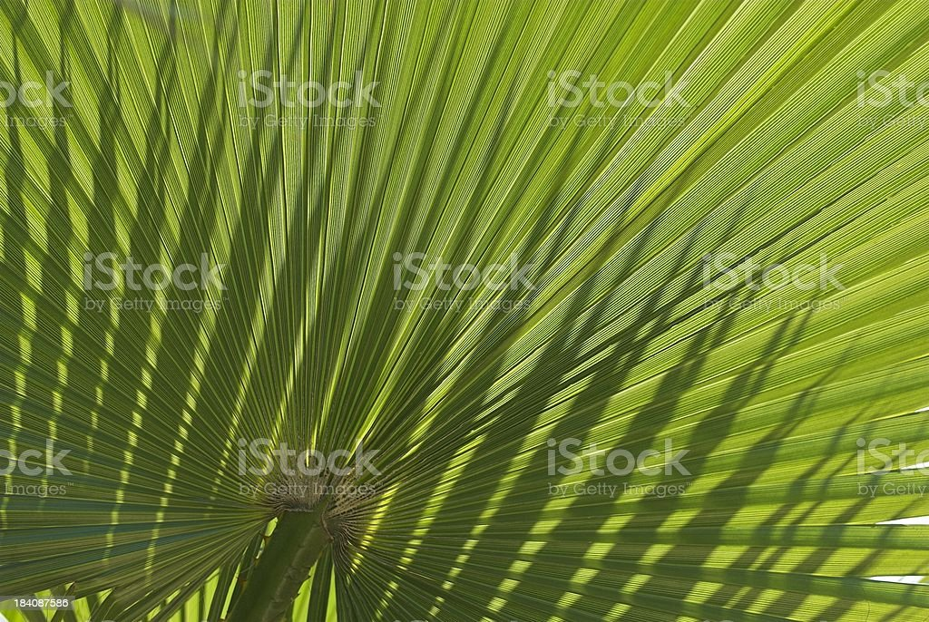 Palm leaf in backlight royalty-free stock photo
