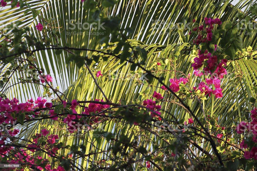 palm leaf in sun stock photo