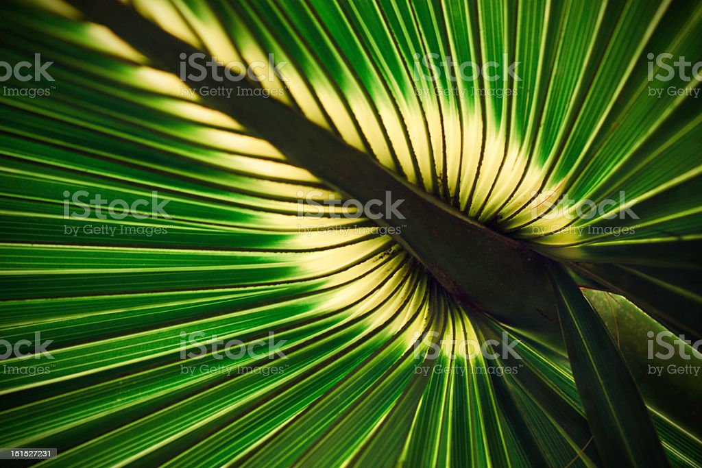 Palm leaf macro stock photo
