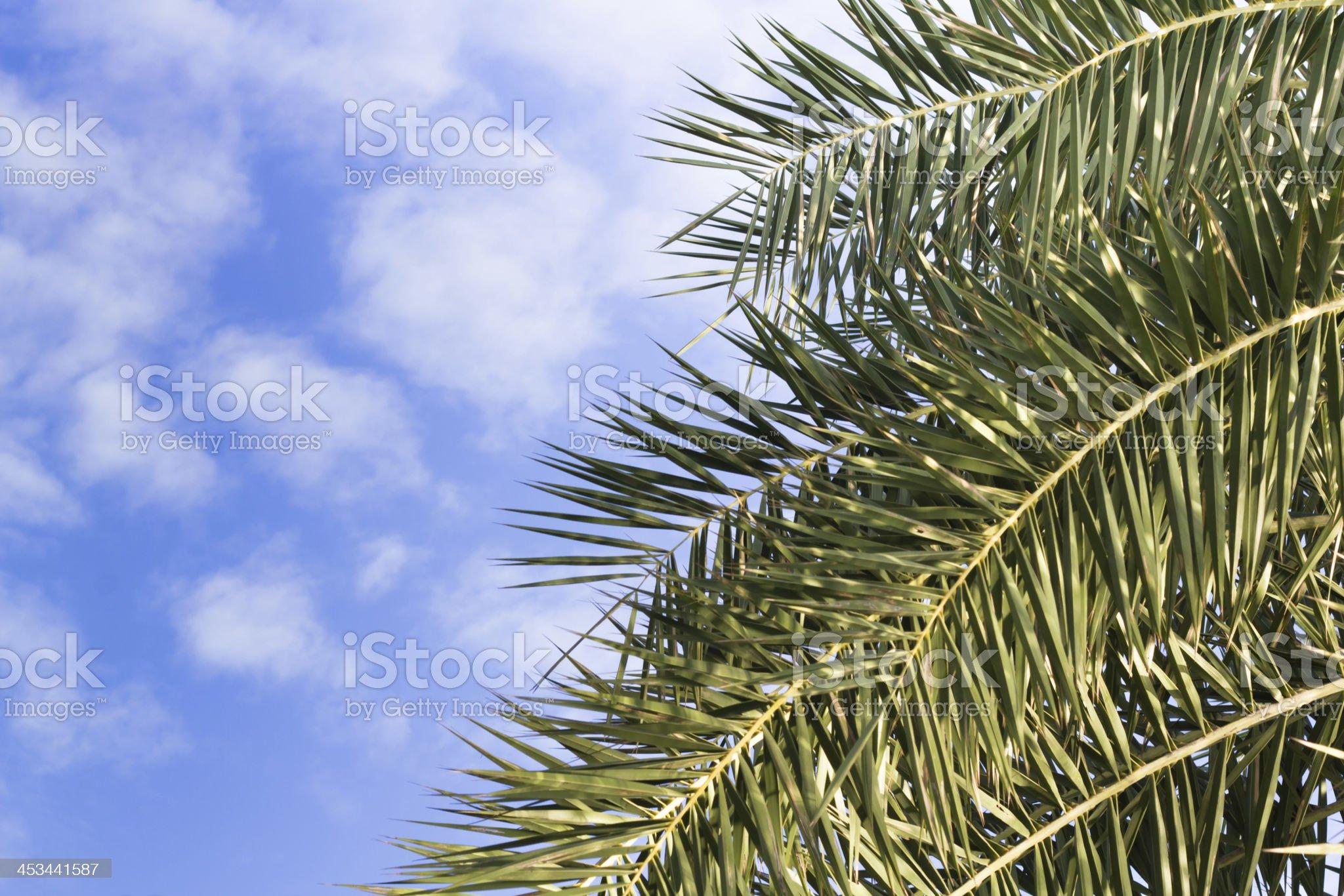 Palm leaf on the fresh blue sky royalty-free stock photo