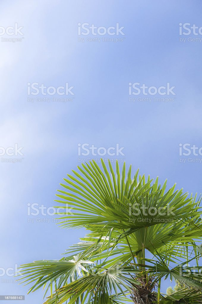 Palm leaves against blue sky in a park, southern Germany stock photo