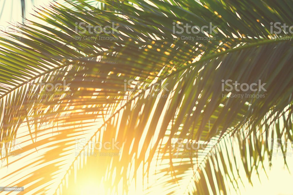 Palm leaves against sunset stock photo