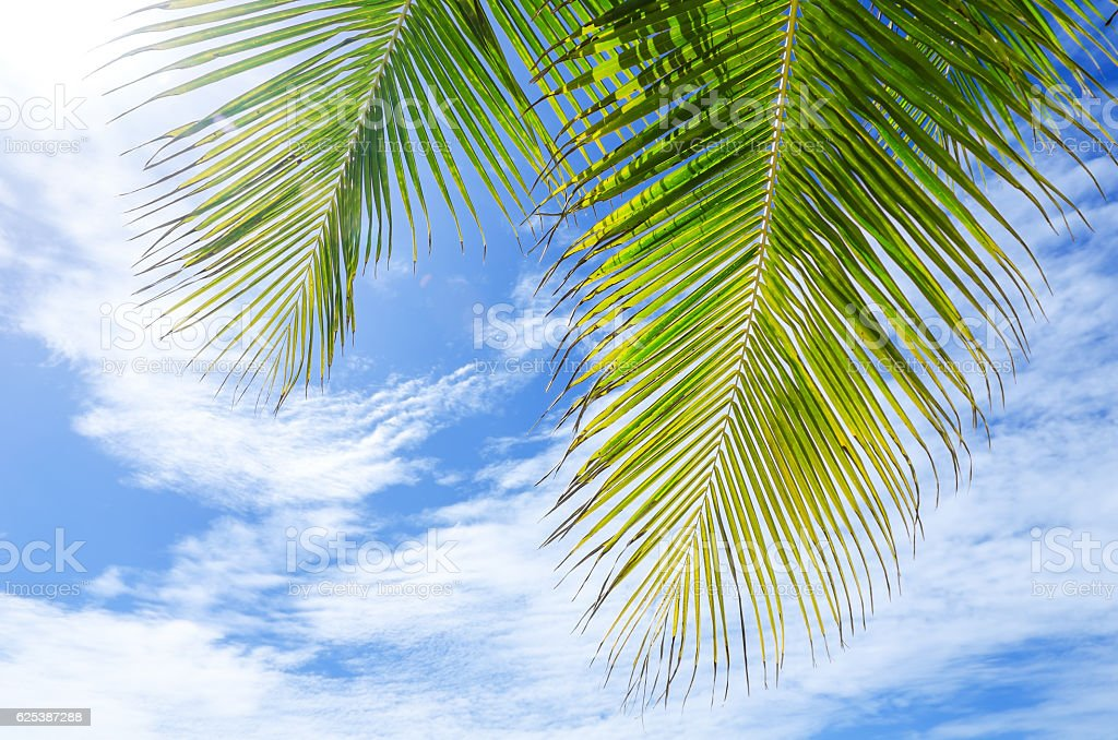 Palm leaves and bule clouds sky background stock photo