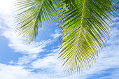Palm leaves and bule clouds sky background