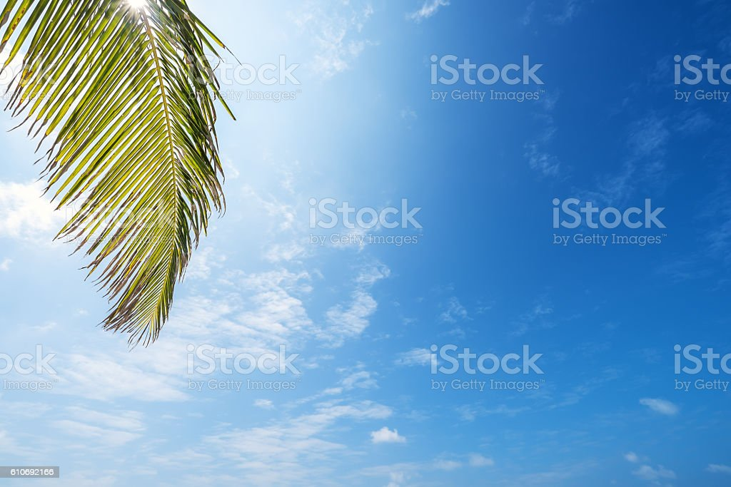 Palm leaves and bule sky background stock photo