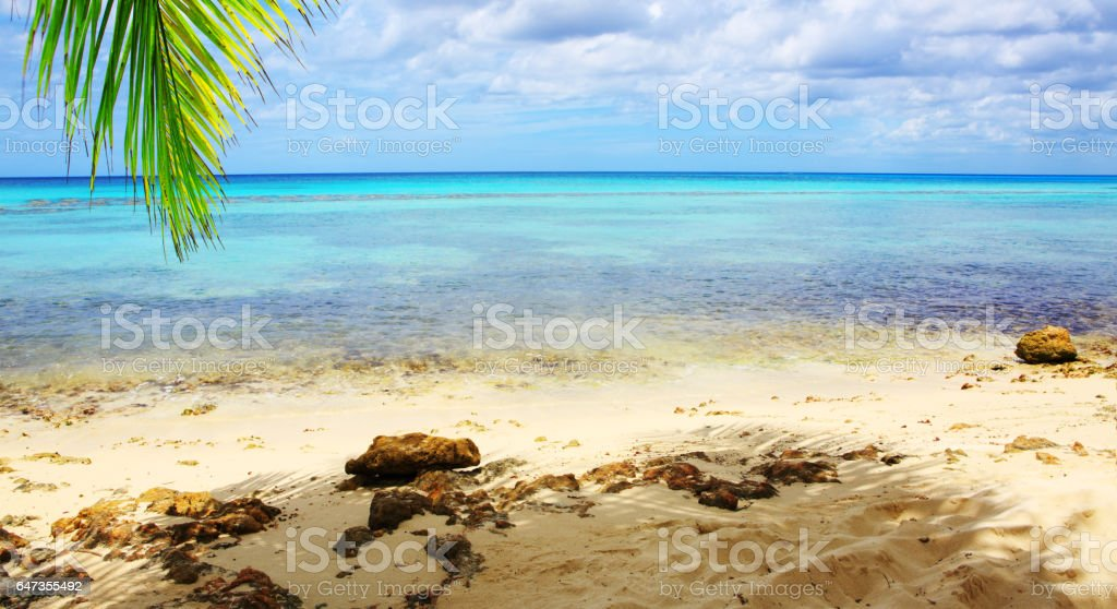 Palm leaves and caribbean sea stock photo