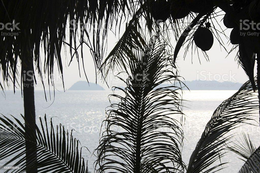 Folhas de palmeira e Cocos foto de stock royalty-free