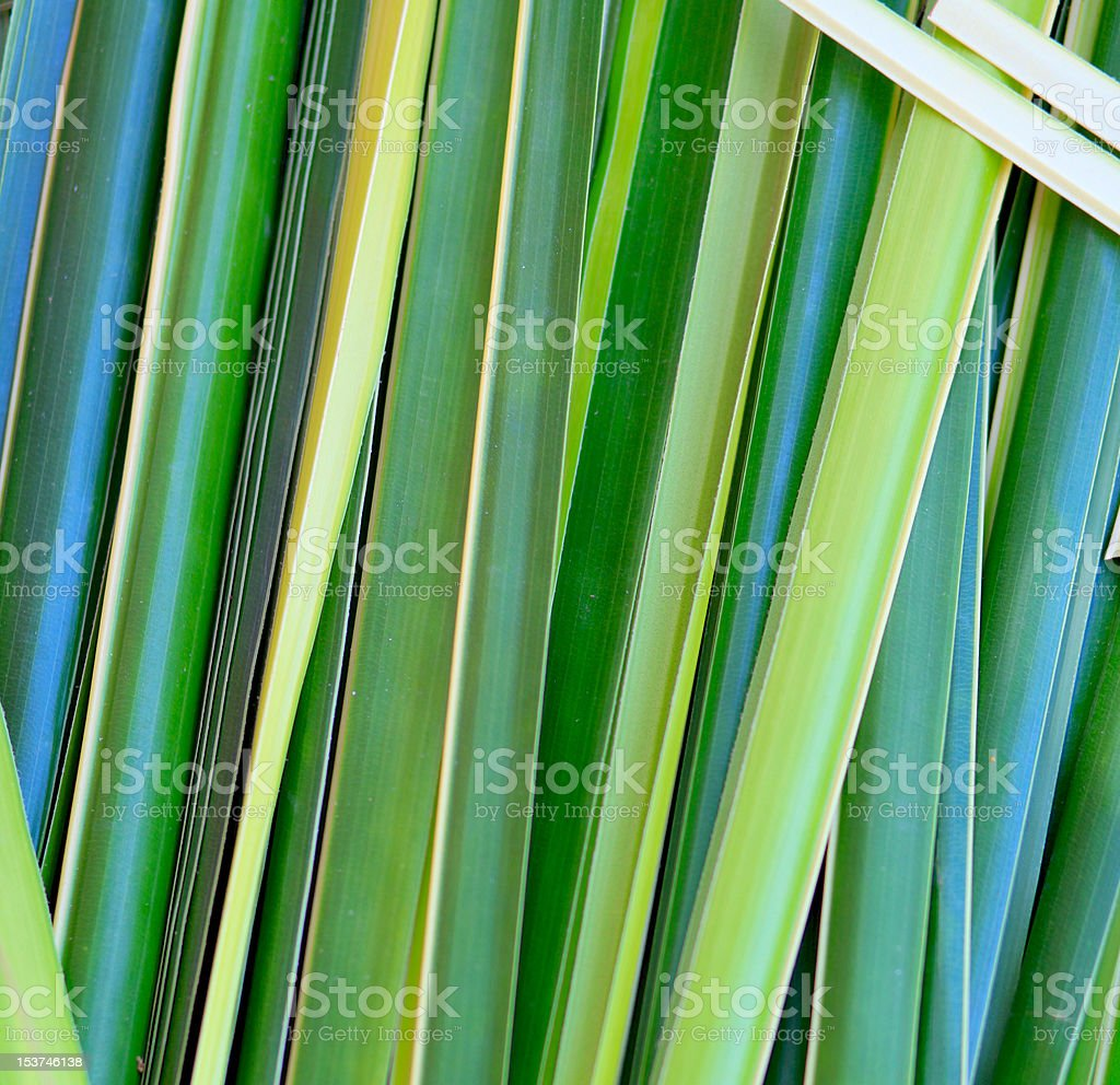 palm leaves background royalty-free stock photo