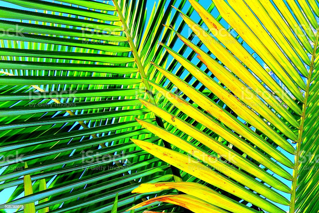 Palm leaves close-up stock photo