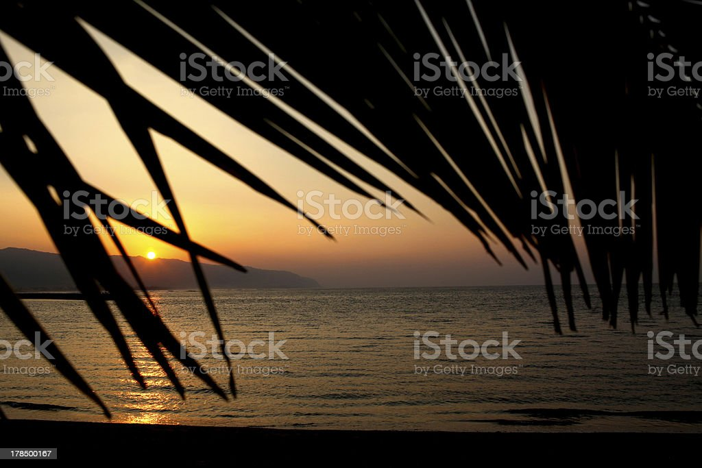 Palm Leaves Framing Sunset On Oahu North Shore stock photo