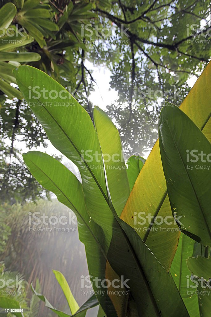Palm Leaves in Rain Forest royalty-free stock photo