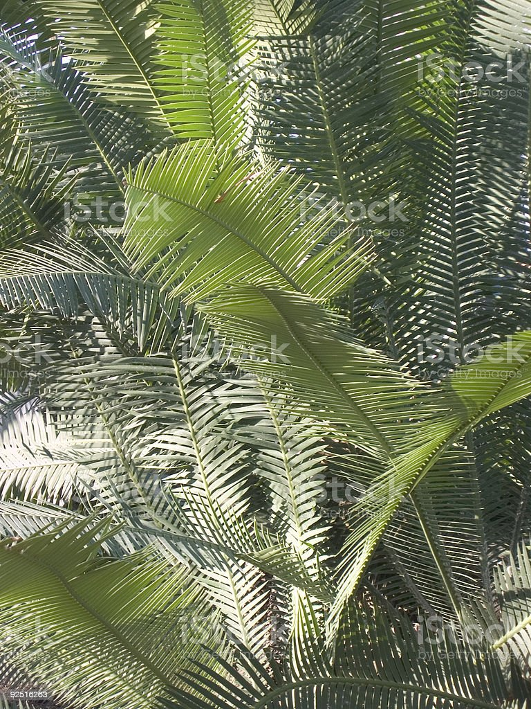 palm leaves in sunlight royalty-free stock photo