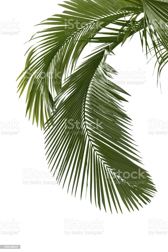 Palm leaves in the rain stock photo