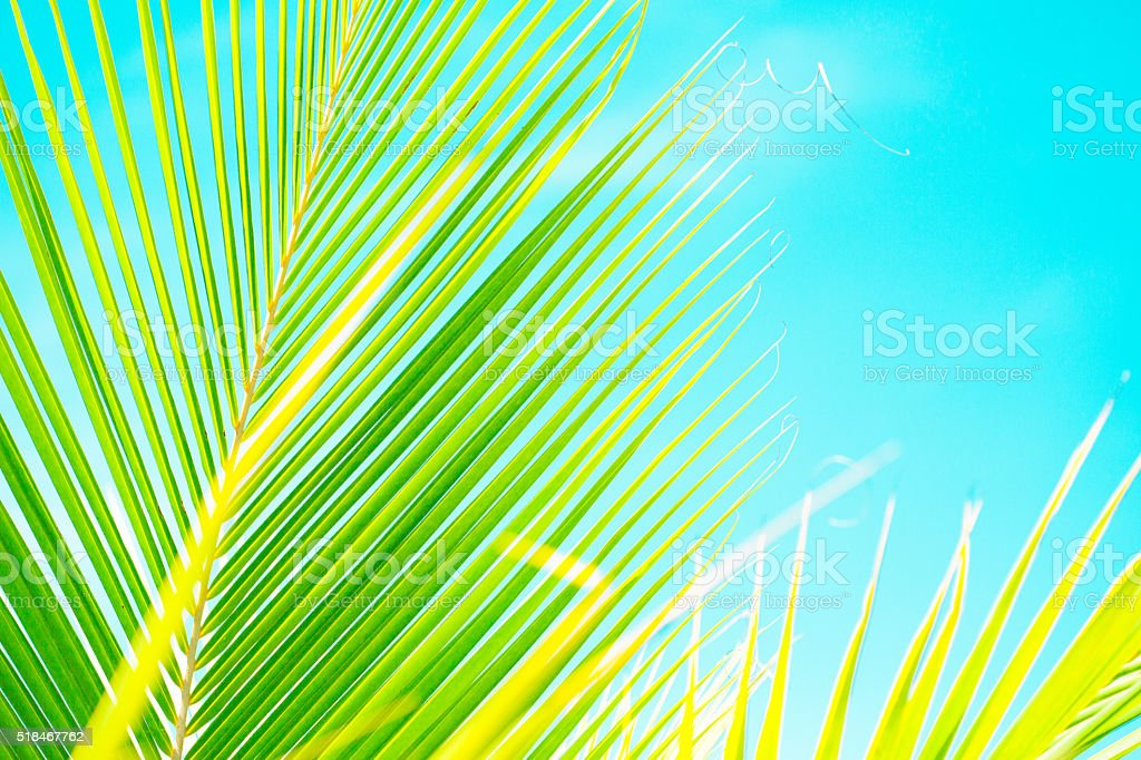 Palm leaves on the sky background stock photo