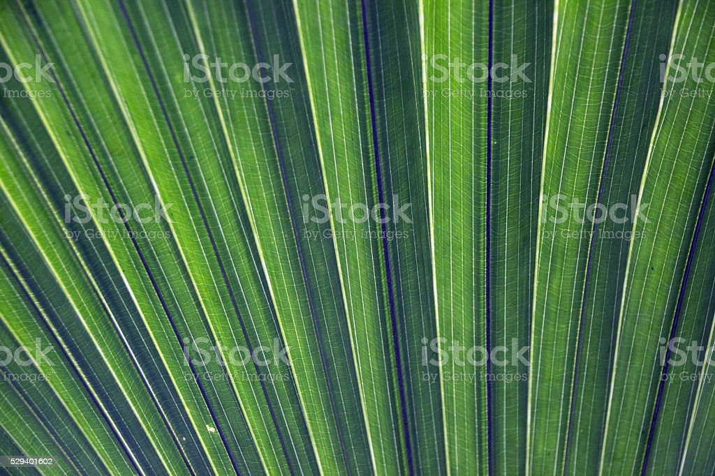 Palm leaves pattern screensaver stock photo