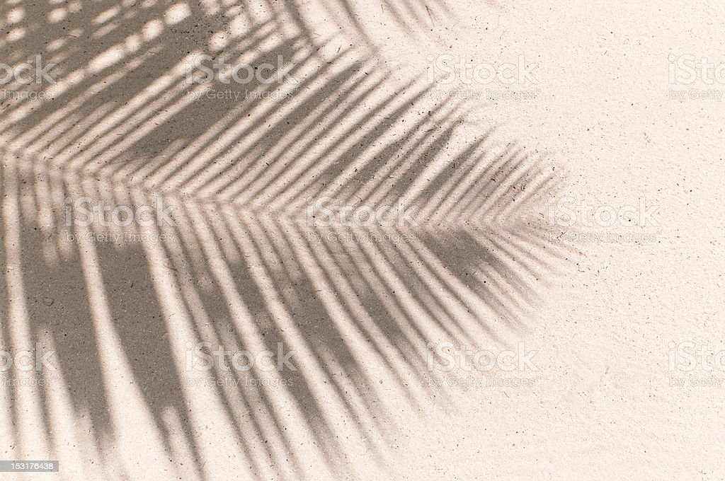 palm leaves shadow background stock photo
