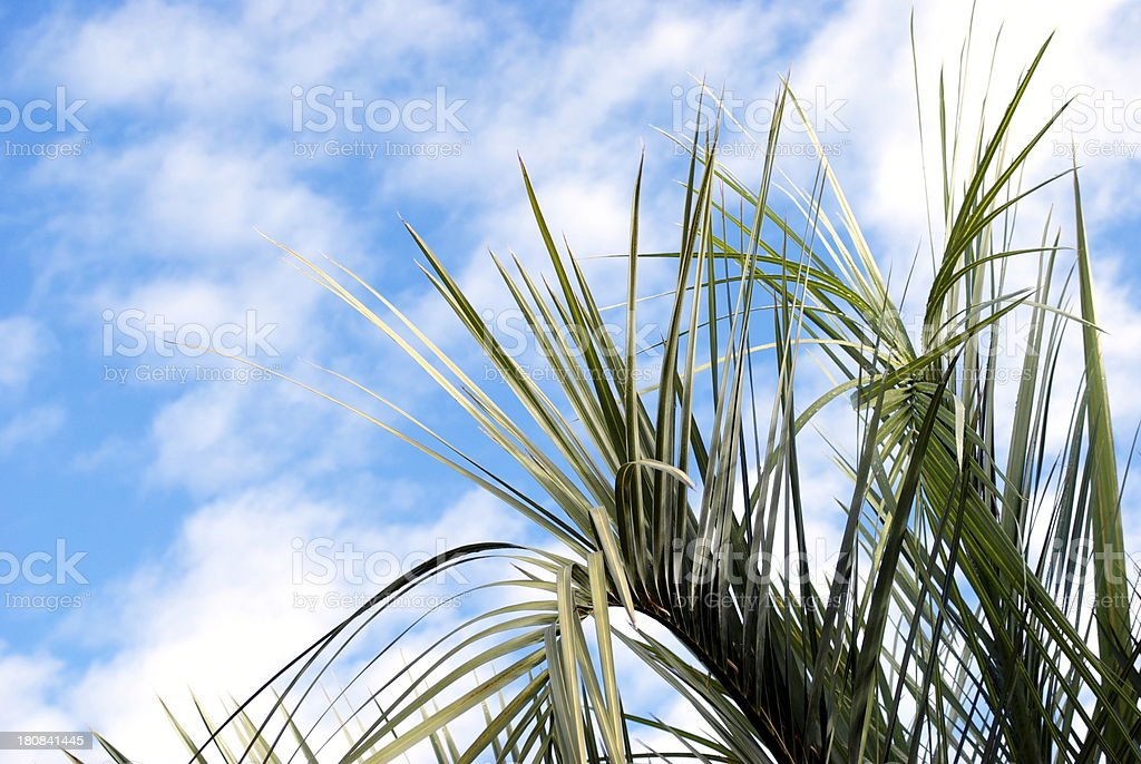 Palm Leaves & Sky stock photo