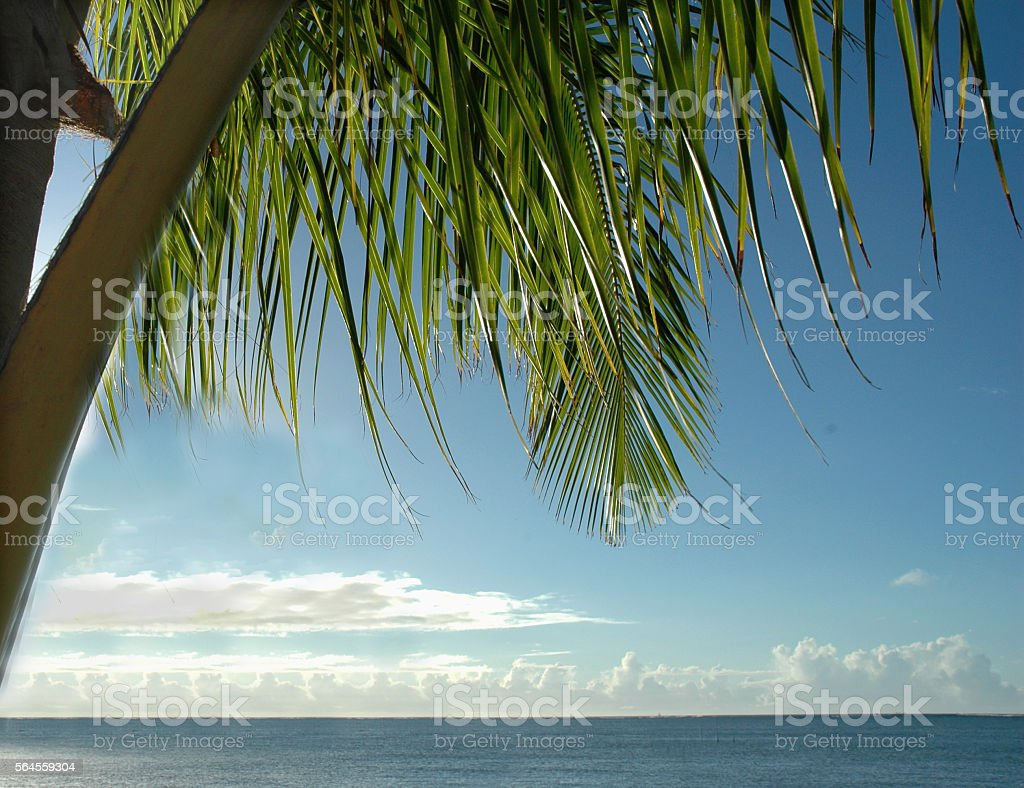 Palm leaves with blue sky and ocean in the background stock photo