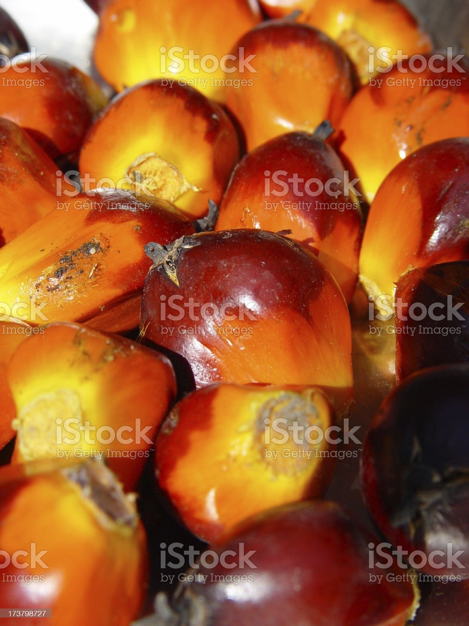 palm nuts royalty-free stock photo