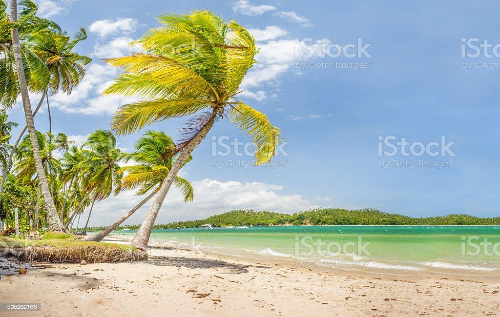 Palm of Carneiros beach stock photo