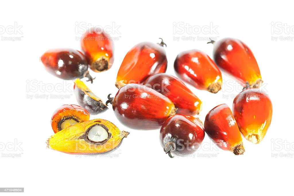 palm oil fruit on white background. stock photo