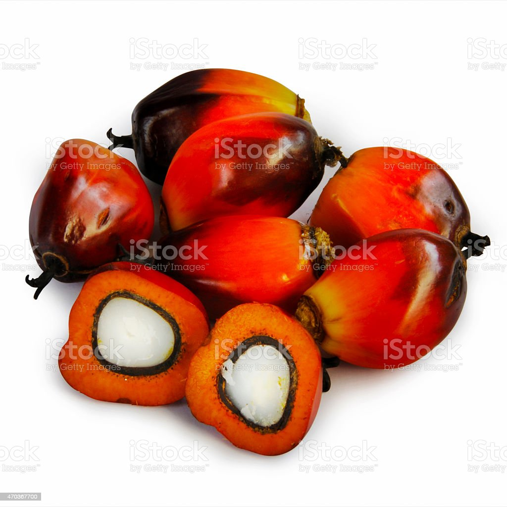 Palm oil seeds in red and white stock photo