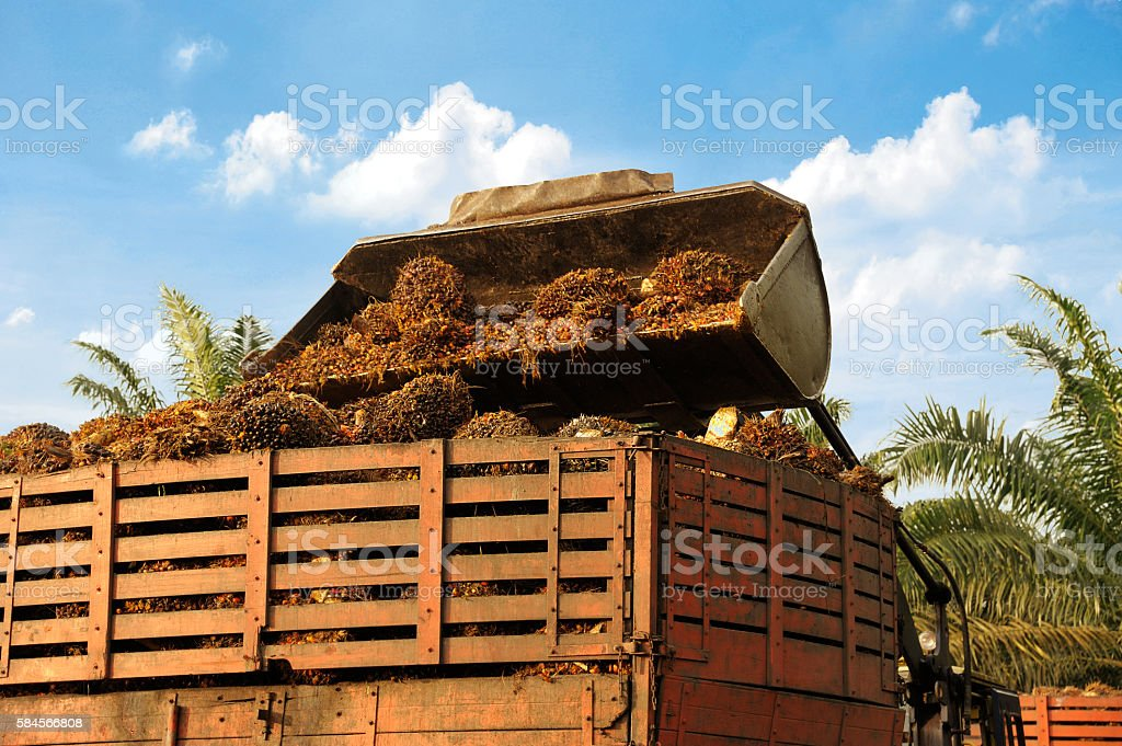 Palm oil uploading stock photo