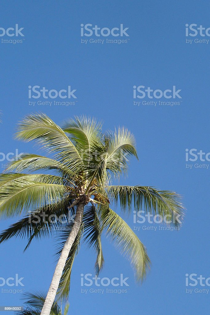 palm on blue royalty-free stock photo