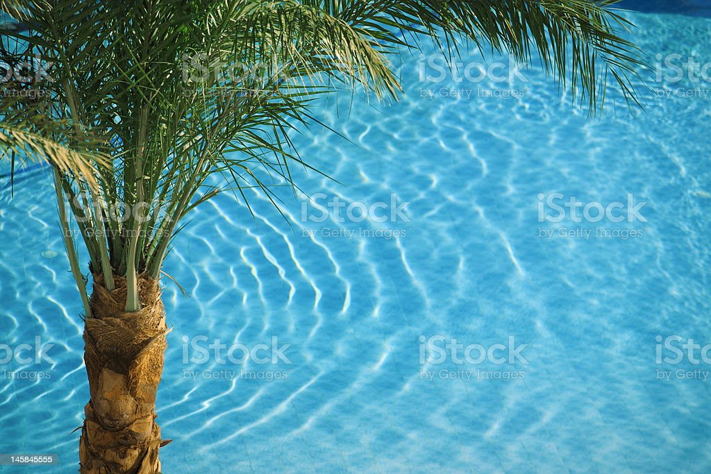 palm on blue pool royalty-free stock photo
