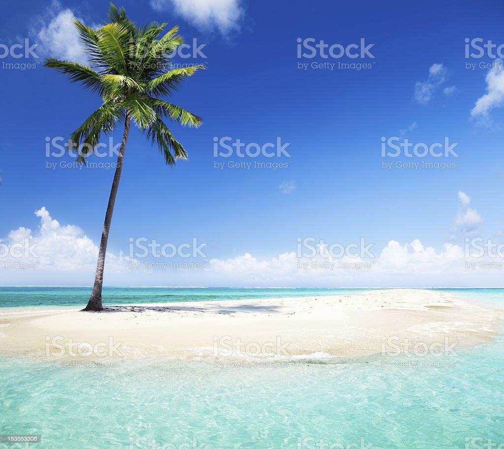palm on island royalty-free stock photo