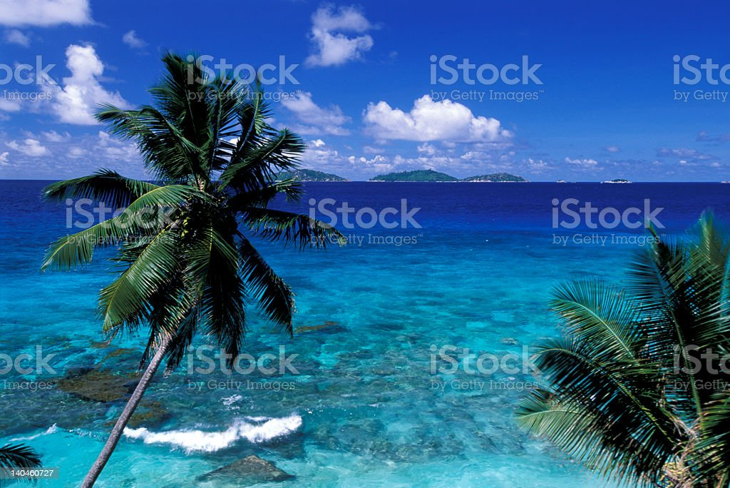 palm on the tropical sea royalty-free stock photo
