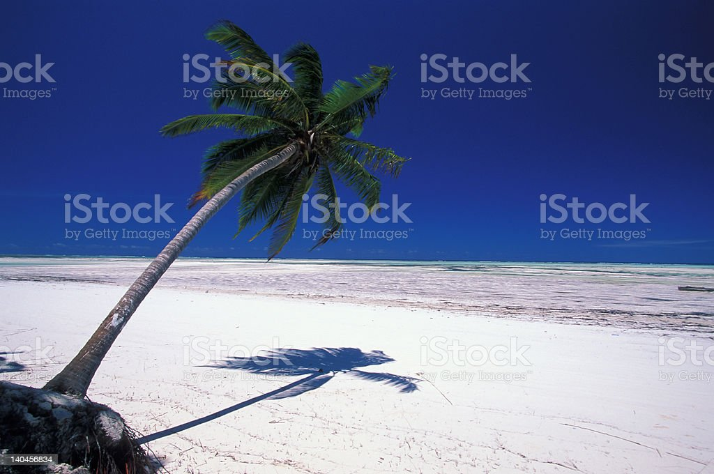 palm on the white sand beach royalty-free stock photo
