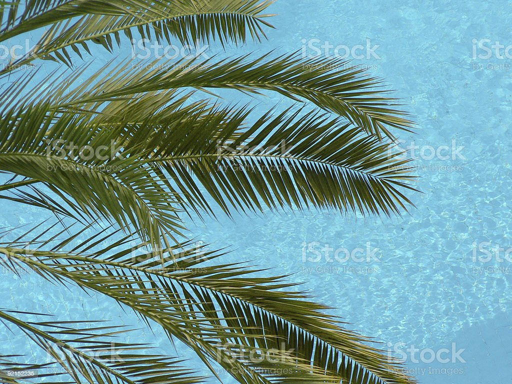 Palm over Pool royalty-free stock photo