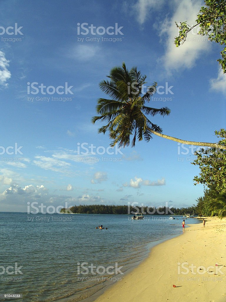 Palm over the ocean royalty-free stock photo