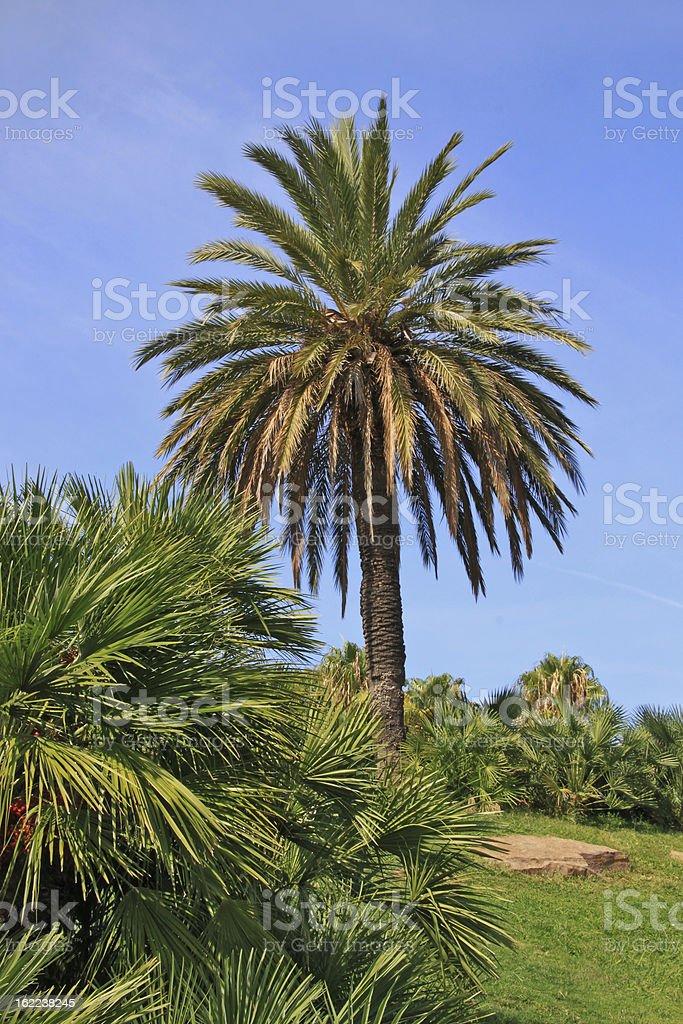 palm royalty-free stock photo