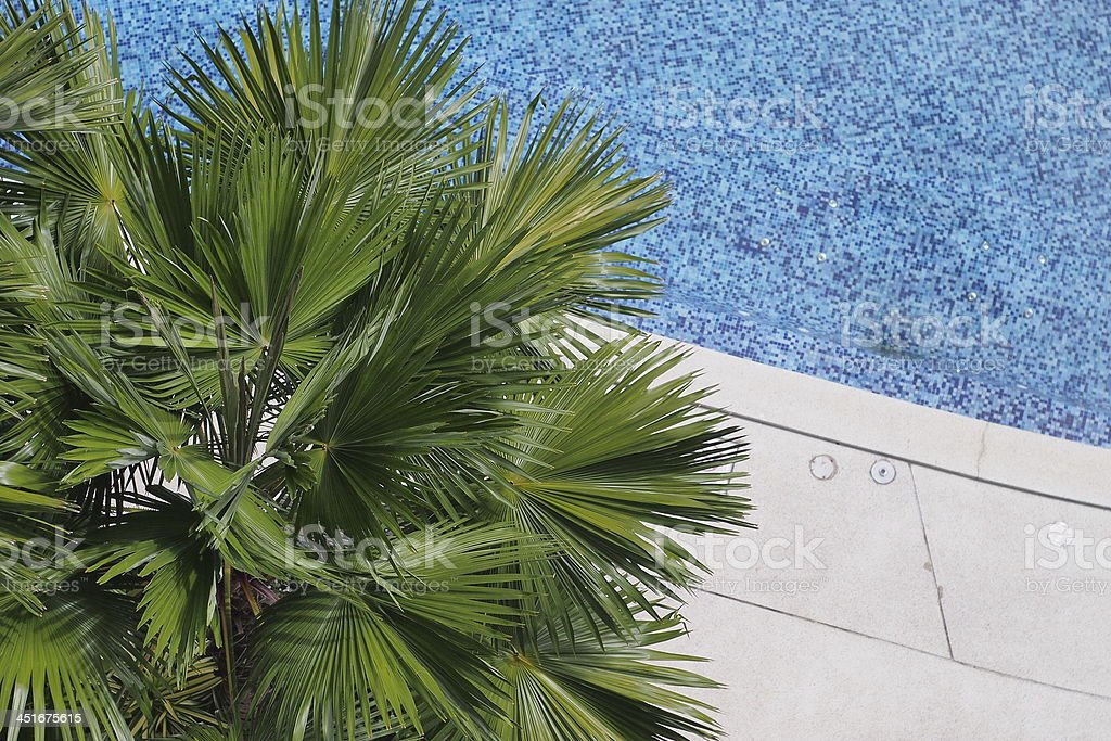 Palm & Pool stock photo