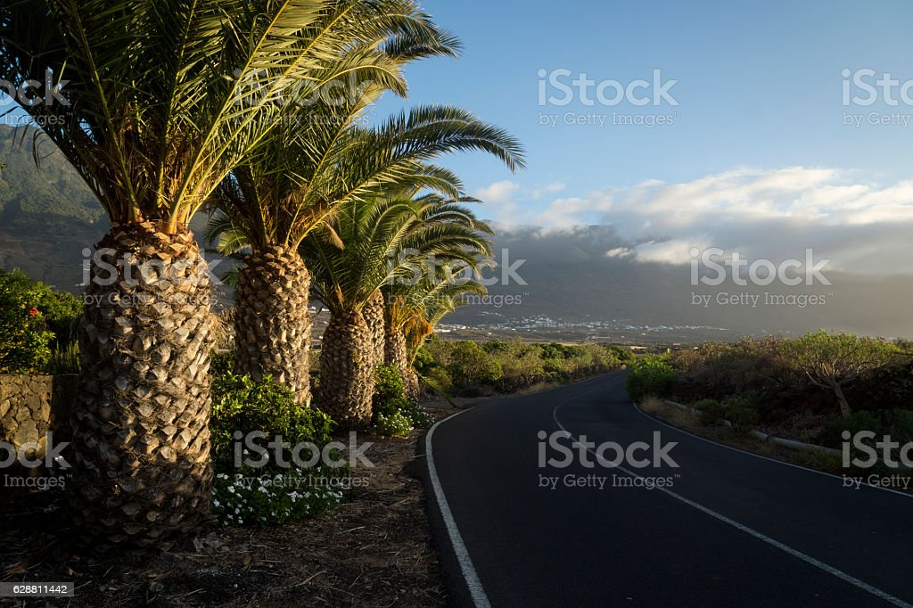 palm road to frontera stock photo