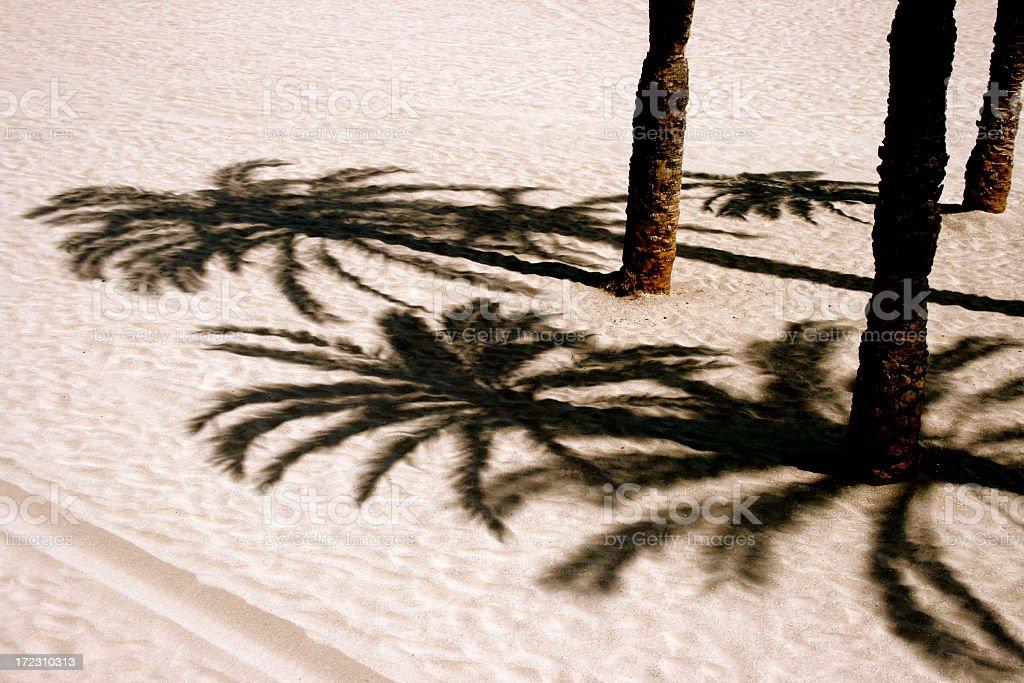 palm shades stock photo