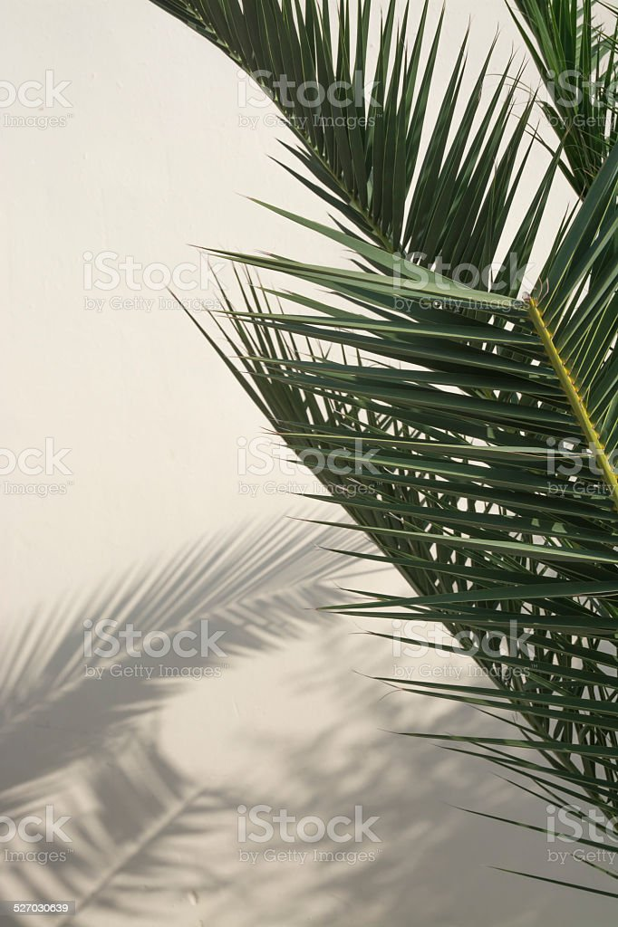 Palm shadow on white wall stock photo