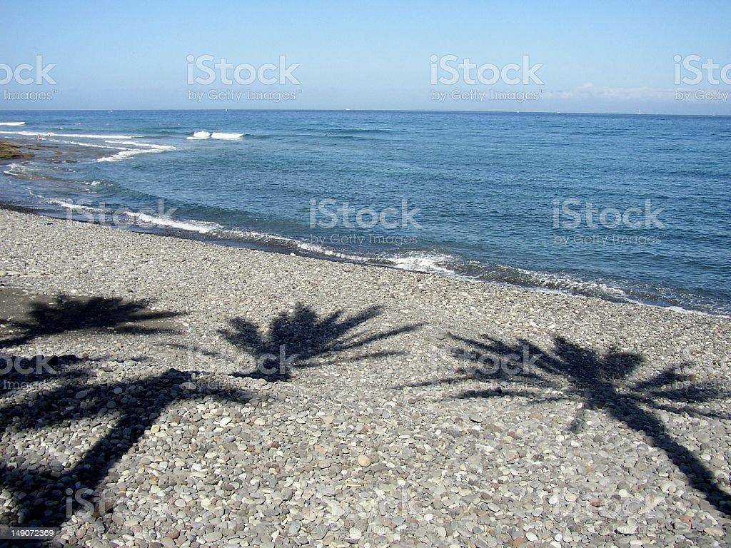 Palm Shadows in Tenerife rock beach royalty-free stock photo