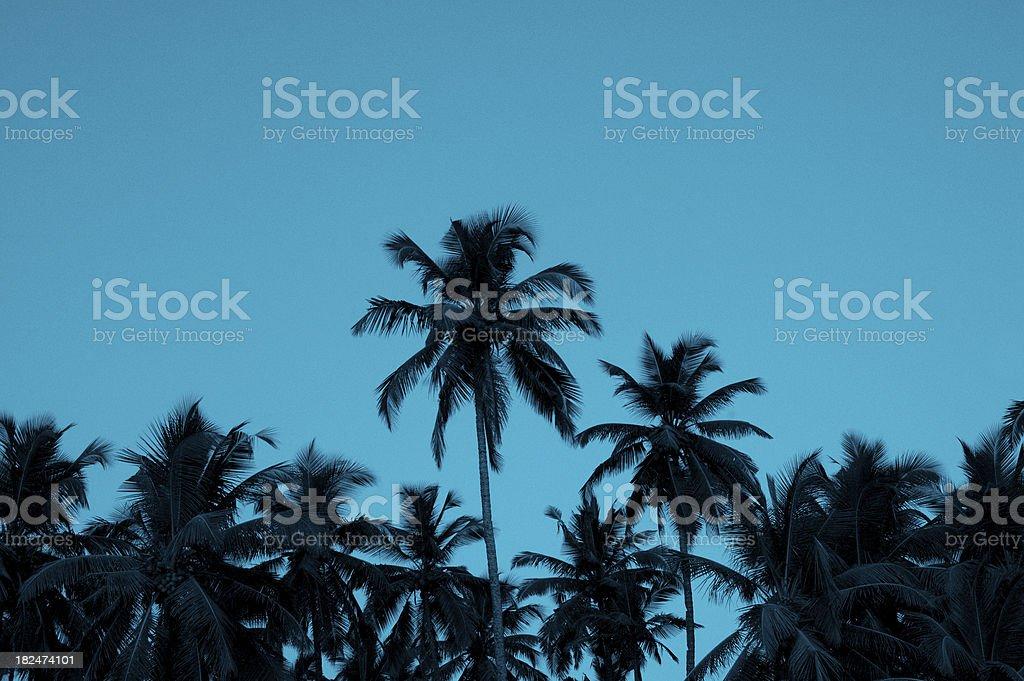 Palm silhouettes stock photo