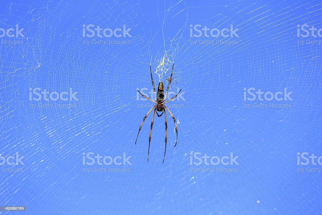 Palm spider royalty-free stock photo